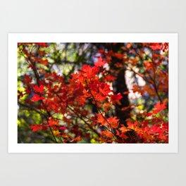 Red Fall Foliage Art Print