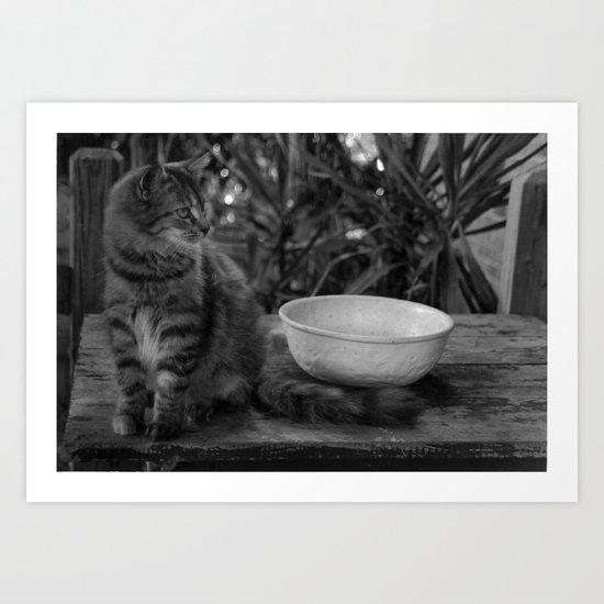 Feral Cat Art Print