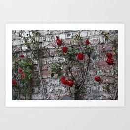 Roses and Brick Art Print