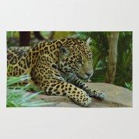 jaguar Area & Throw Rugs featuring  Jaguar  by Darren Wilkes Fine Art Images