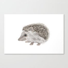 Hedgehog Jamboree Canvas Print
