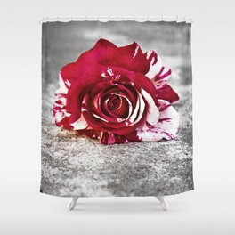 Variegated Rose on Concrete Shower Curtain