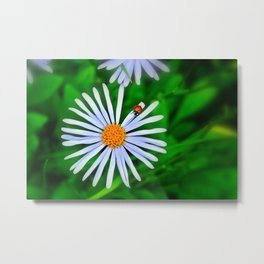 Blue daisy and a ladybird Metal Print