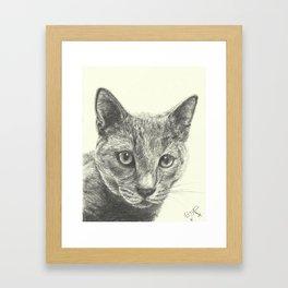 Gray cat Framed Art Print