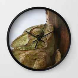 Close Up Of A Wild Green Chameleon Wall Clock
