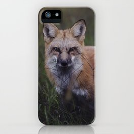 Vulpes iPhone Case