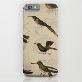 Naturalist Hummingbirds iPhone Case