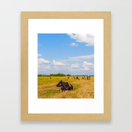 Cows on meadow with green and yellow grass Framed Art Print