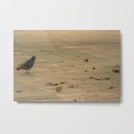 dove in park Metal Print