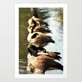 GEESE ON A LOG IN THE AFTERNOON SUN Art Print