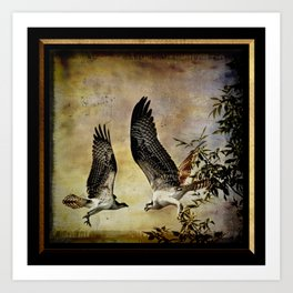 Vintage Osprey Art Print