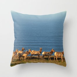 Tule Elk Cows Throw Pillow