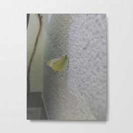 Butterfly indoors Metal Print