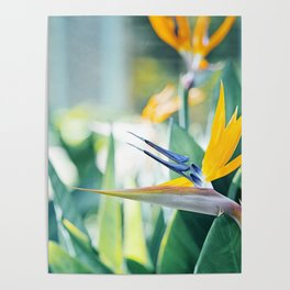 Bird of Paradise Photography, Green Orange Aqua Blue, Tropical Flower Nature Botanical Poster