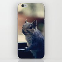 squirrel iPhone & iPod Skins featuring Squirrel  by Anne Staub