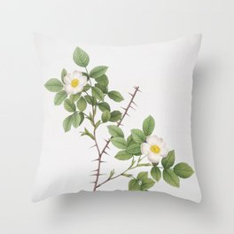 Vintage Spiny Leaved Rose of Dematra Illustration Throw Pillow