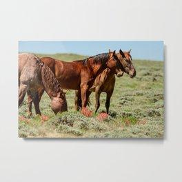Wyoming Wild_Horses - II Metal Print