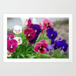 Grandmother's pansies Art Print