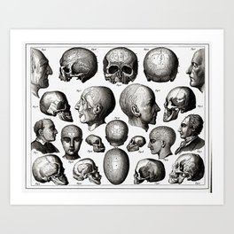 Ratio of Lobes Responsible for the Psychological Type of Person (Phrenology) Art Print