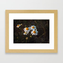 Daisies Part Two Framed Art Print