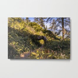 Hiking trail and a tree tunnel Metal Print
