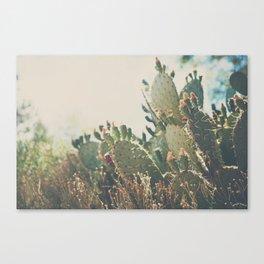 desert prickly pear cactus ... Canvas Print