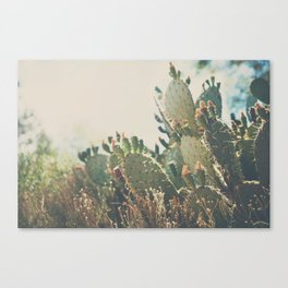 desert prickly pear cactus ... Canvas Print