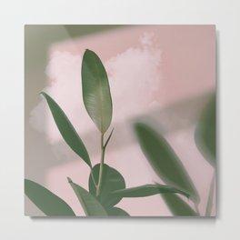 01#Ficus Elastica#cloud Metal Print