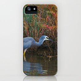 A White Faced Heron Hunting In The Shallows iPhone Case