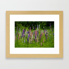 Meadow Larkspur Wildflower Framed Art Print