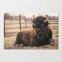 buffalo Canvas Prints featuring Buffalo  by Rob Hawkins Photography