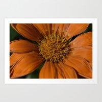 Big Orange Flower Art Print