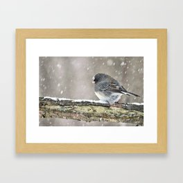 Once Upon a Snow Bird: Junco Framed Art Print