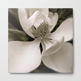 Angelic Magnolia II B&W Metal Print