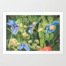 Bee with Blue Poppies Art Print