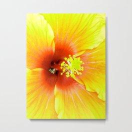 Sunshine Hibiscus Metal Print