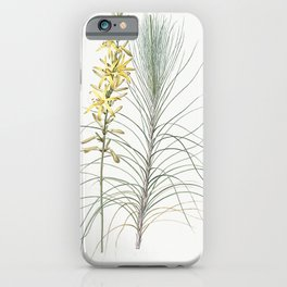 Species daffodil  from Les liliacees (1805) by Pierre Joseph Redoute (1759-1840) iPhone Case