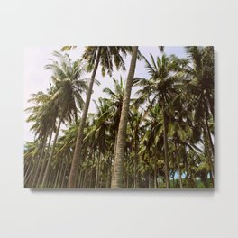 Palm Trees Metal Print
