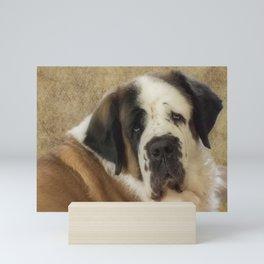 St Bernard dog portrait Mini Art Print