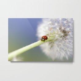 Dandelion Ladybugs Metal Print