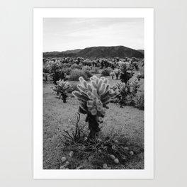 Cholla Cactus Garden V Art Print