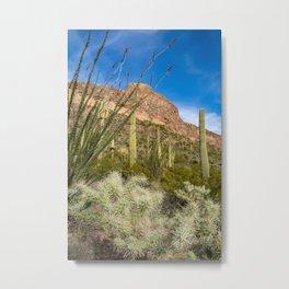 Variety of desert vegetation growing in Arizona Organ Pipe National Monument Metal Print
