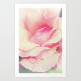 Softened Rose Abstract Nature / Botanical / Floral Photograph Art Print