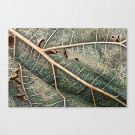Organic Decay Canvas Print