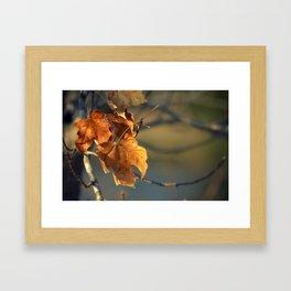 Last Winter's Leaves Framed Art Print