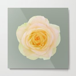 bed of roses: texas Metal Print