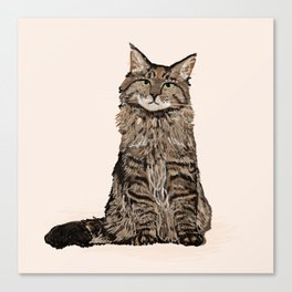 Maine Coon sitting cat portrait cute cat lady gift idea for cat owner cat lover animal pet friendly  Canvas Print