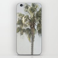 palm tree iPhone & iPod Skins featuring Palm Tree by Pure Nature Photos