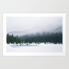 Evergreen Winter Forest (Color) Art Print