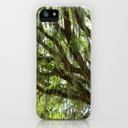Live Oak in Springtime iPhone Case